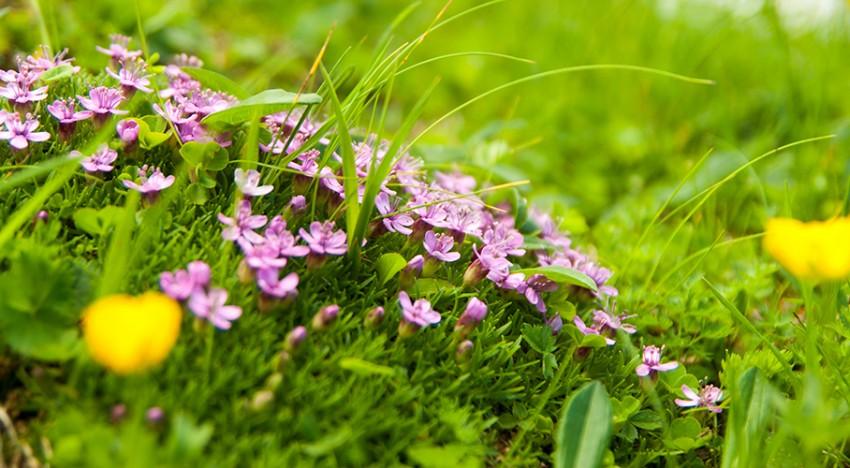 La pelouse nouveau genre