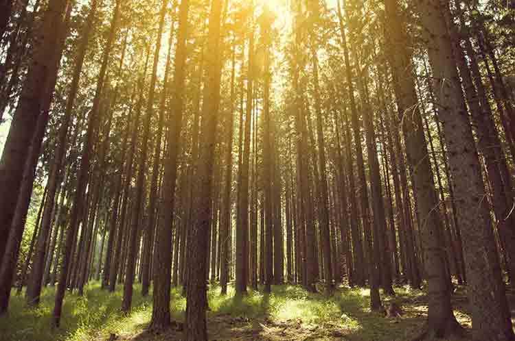arbres-leed-interdisciplinaire-design-02