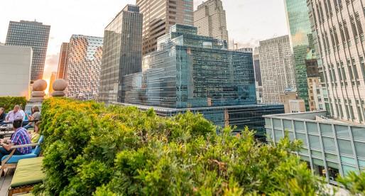 Les bénéfices des toits verts