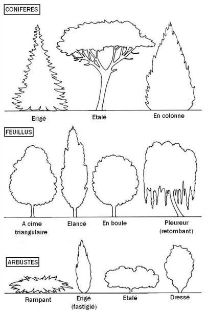 formats et ports d'arbres