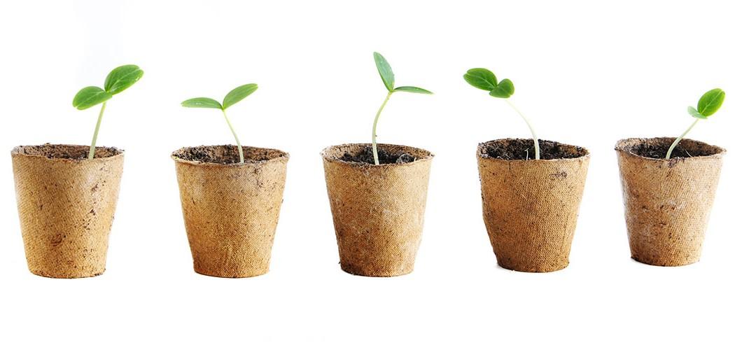 Épater la galerie avec des semis